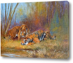 Постер Тигры у водопоя