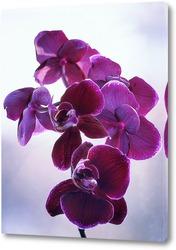 Постер Ветка орхидеи