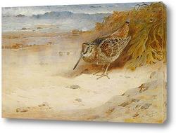 Петух и курица фазана на краю леса