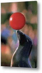 Постер Seal003