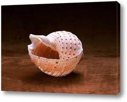 shell022