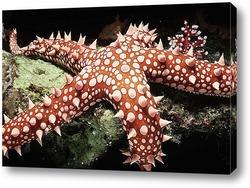 Постер Starfish034