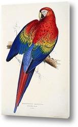 Чернохвостый попугай