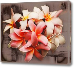 Постер Бело-розовые цветы