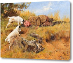 Собаки в питомнике