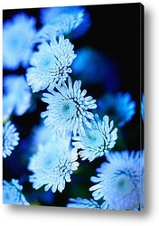 Flower661