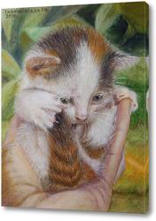 Постер Котёнок на ладони.