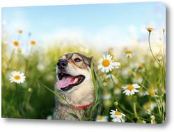 Картина собака на лугу