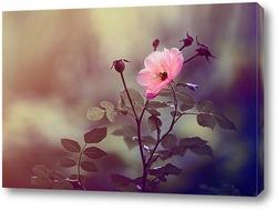 Постер Чайная роза.