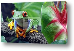 Постер Red-Eyed Tree Frog