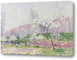 Картина Яблоки в цвету