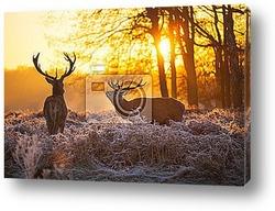 Постер Red deer