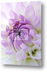 Постер Closeup of dahlia blossom