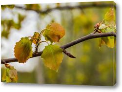 """Картина """"Осенние листья березы""""."""