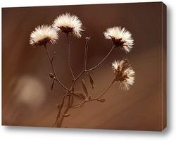 Flower422