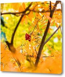 Группа осенних  тыкв, ягод и оравших  листьев