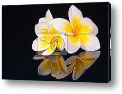 Постер Leelawadee flower and its reflecio