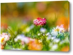 Постер Красный Луговые цветы в весеннее время
