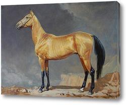 Постер Золотой ахалтекинец