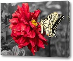 Картина Желтая бабочка на красном цветке