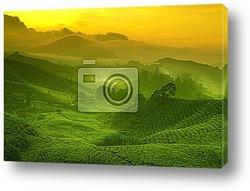 Постер Tea plantation