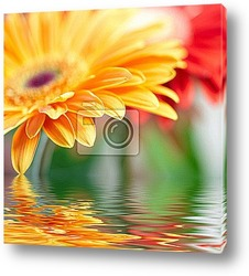 Closeup photo of yellow daisy-gerbera