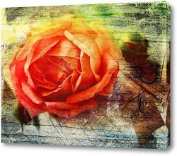 Красочная роза