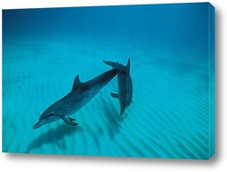 dolphin079