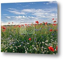Постер Весенний луг с ромашками, васильками и маками