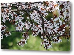 Постер Ветка цветущей сакуры