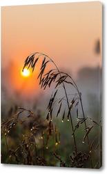 Колос растения на фоне восходящего солнца с каплями росы