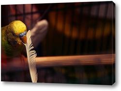 Постер Волнистый попугай