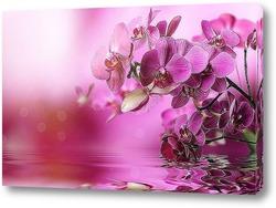 """Картина """"Нежные цветы Орхидеи""""."""