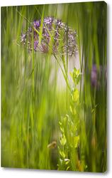 луговая трава