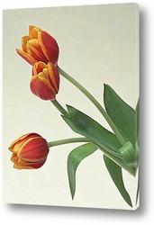 photo of tulips