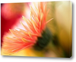 Flower658