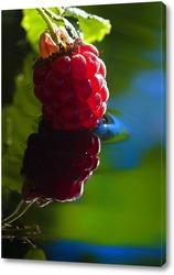 Постер малина