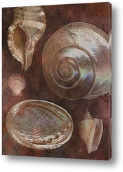 shell026