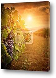 Бокал вина на закате в винограднике