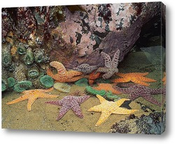 Постер Starfish029