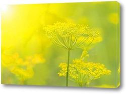 Постер укроп в солнечном свете