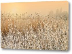 Постер Тростников возле озера