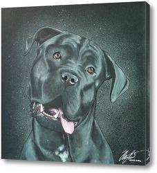 Чёрный пёс.