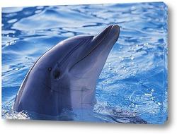 Постер Dolphin052