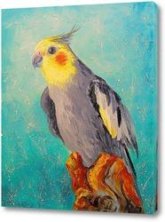 Постер Попугай корелла