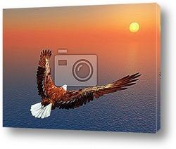 Постер Sea Eagle