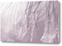 Постер Перья с каплями воды. Макро перьев.