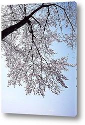 Ftree011