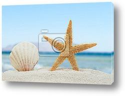 Sea shell and starfish on the beach