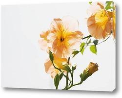 Flower698